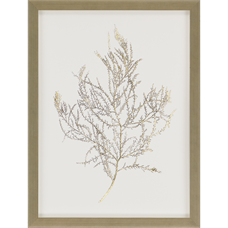 Gold Foil Algae III